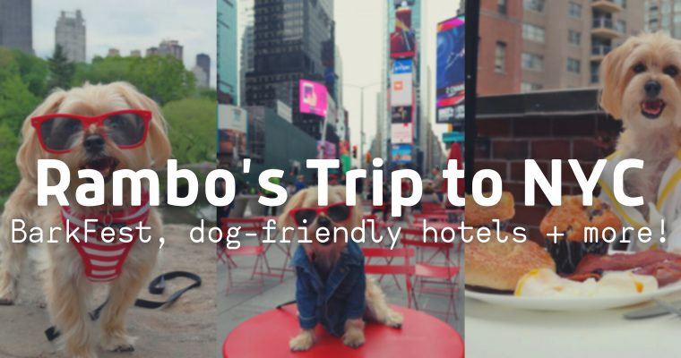 Rambo's Trip to NYC: BarkFest, Dog Friendly Hotels, and More!