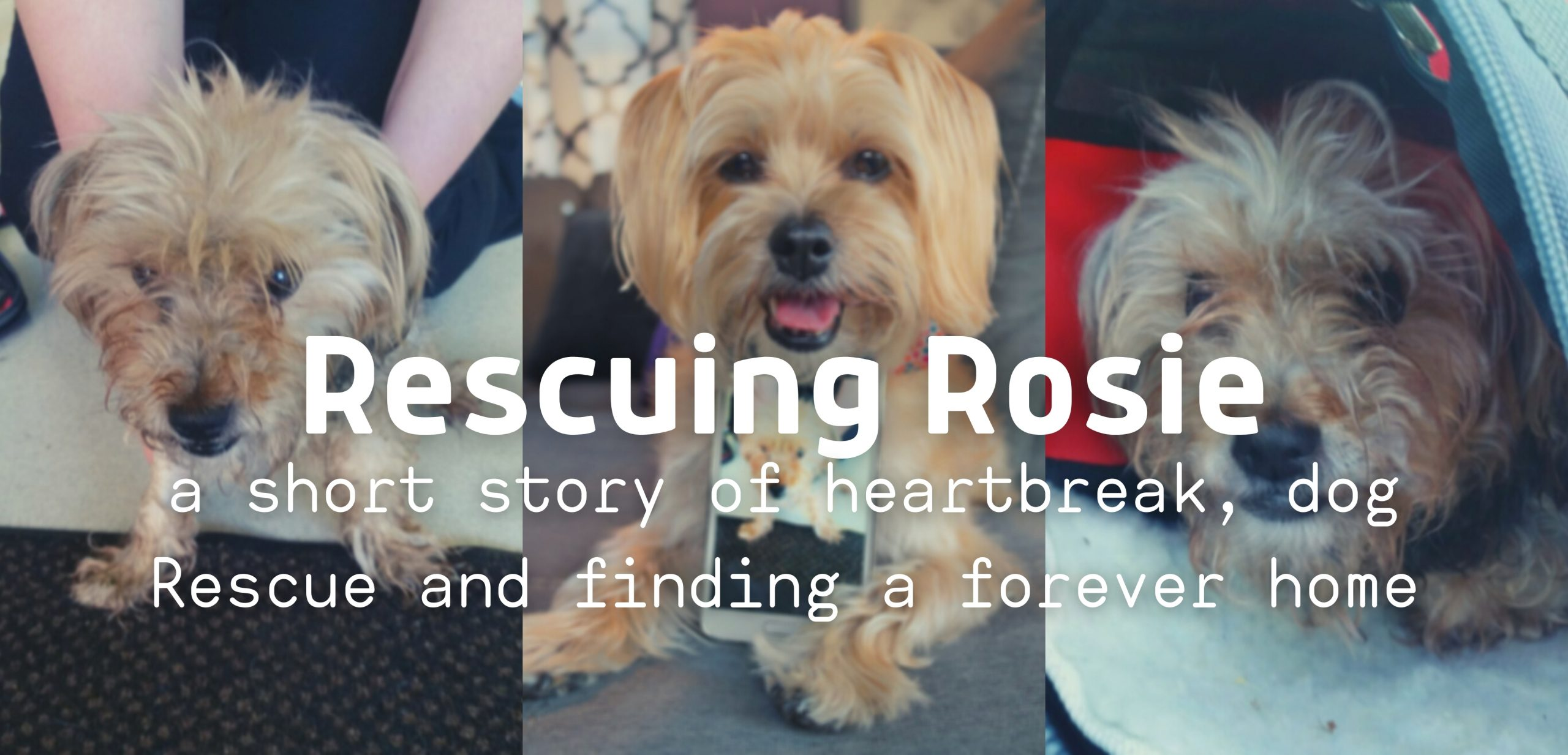 Rescuing Rosie: A Short Story of Heartbreak, Dog Rescue and Finding a Forever Home