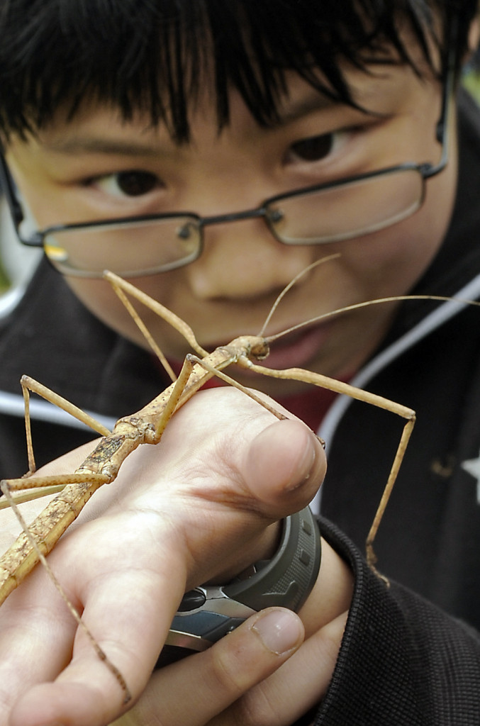 stick bug examine