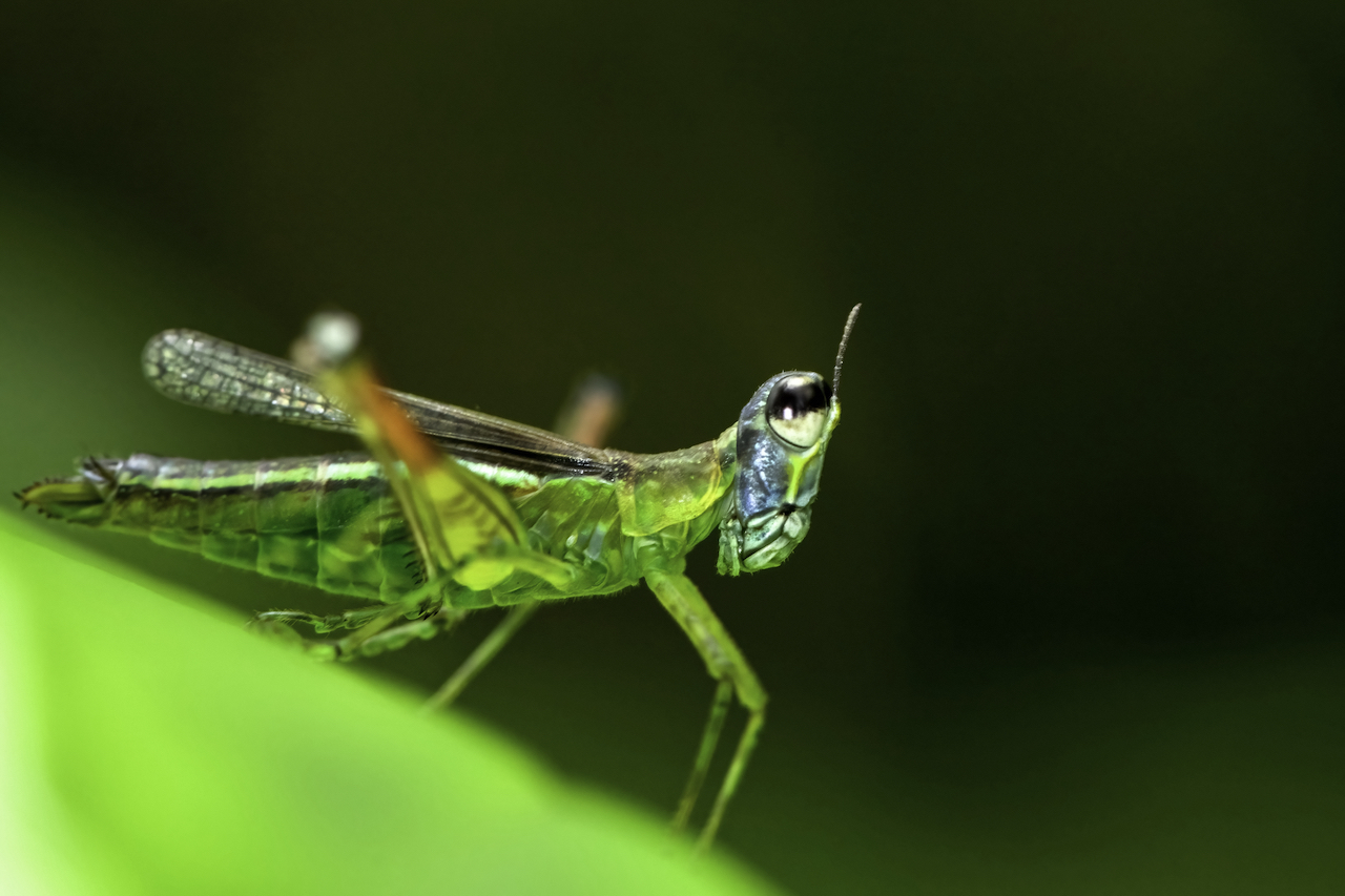 Macro insect 2