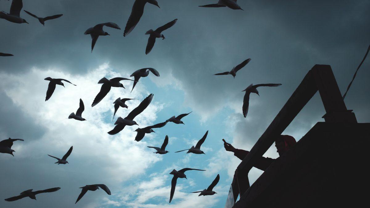 silhouette of birds flying under blue sky during daytime