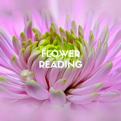 """Intuitive Flower Readings are fun, accurate, entertaining, and certainly give a lot to think about! Dr Jelusich gives a reading on the """"state of your life now"""", this information is about your path and characteristics, and a brief healing. To experience Richard's special abilities in a Flower Reading is a good reset on your path."""