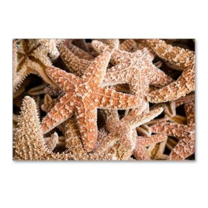 Starfish Postcards Collection