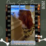 Read more about the article Dear Santa Paws 2020, by Cooper