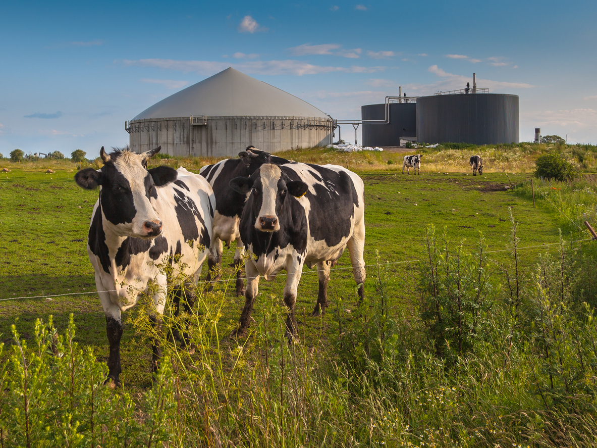 Collecting Methane With a Manure Digester