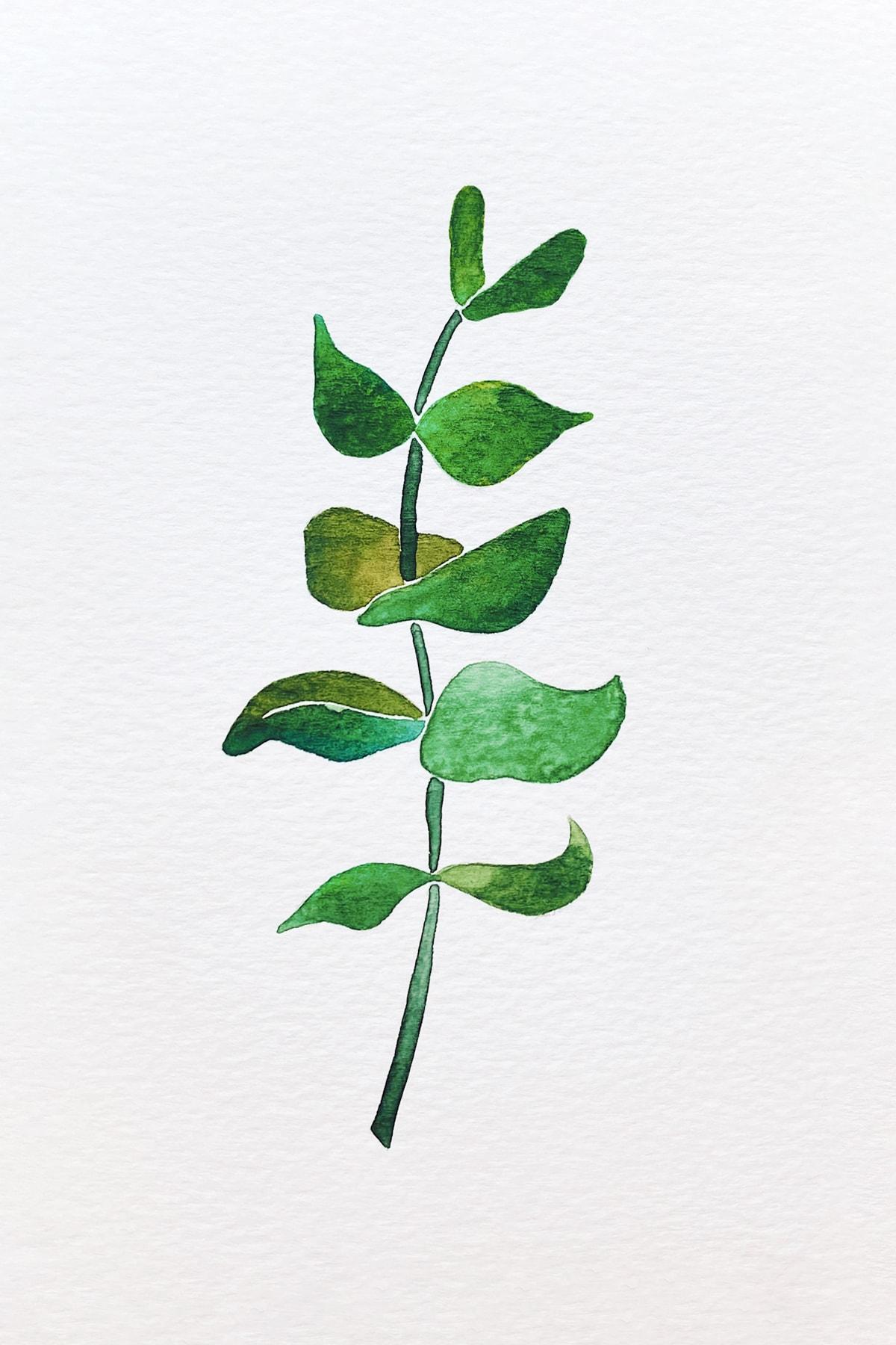 eucalyptus 2-min