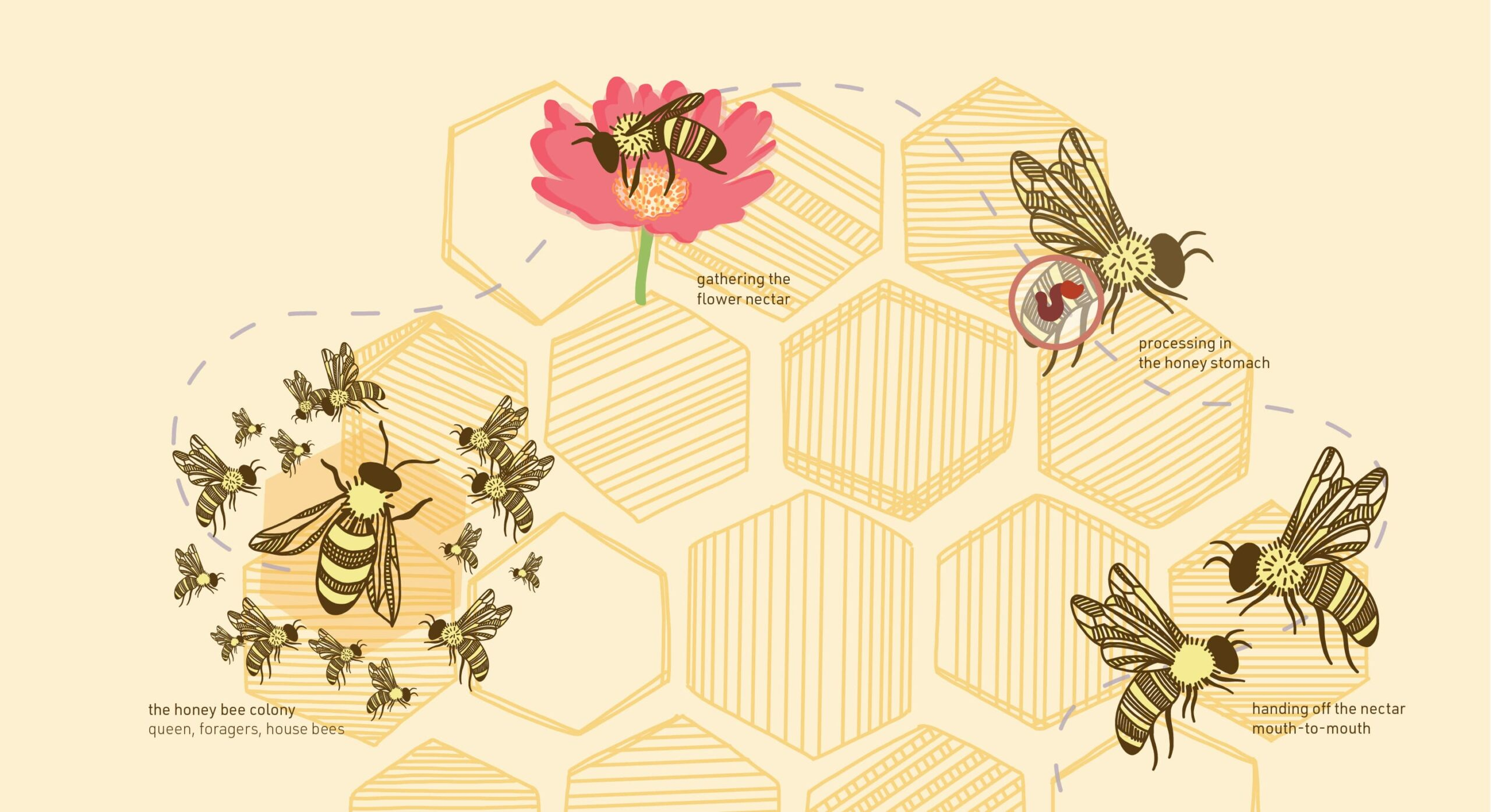 honey making-crop-min
