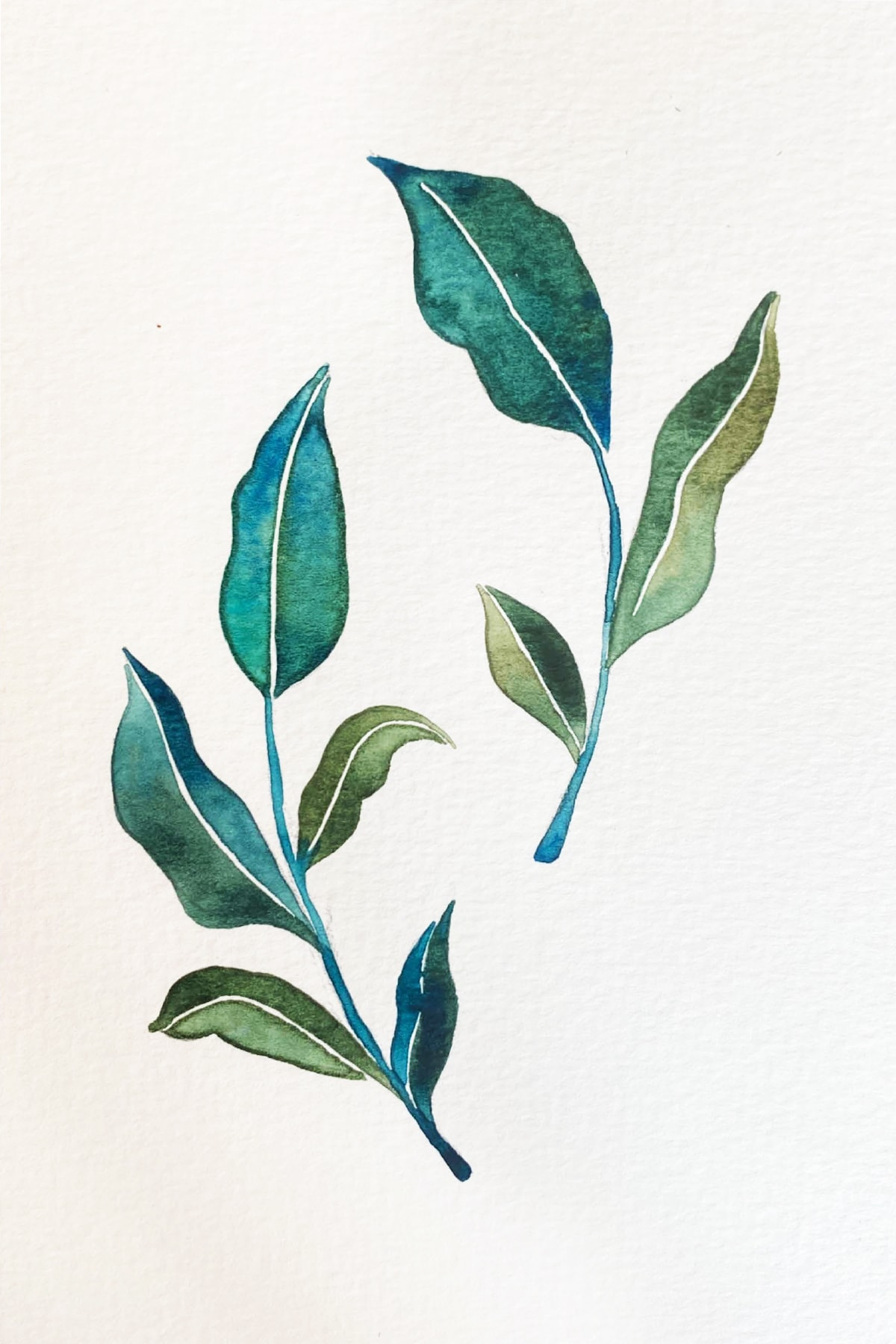 leafy 2-min