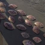 clam shells on beach