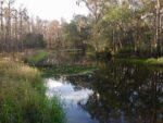 Shingle Creek in February