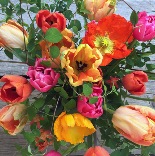 bright tulips and poppies