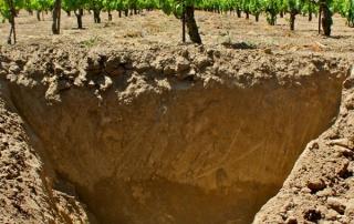 cutting-edge winemakers