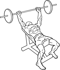 411px-Incline-bench-press-1