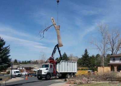 Professional Tree Removal services at mortensen Tree Services at Centennial, CO