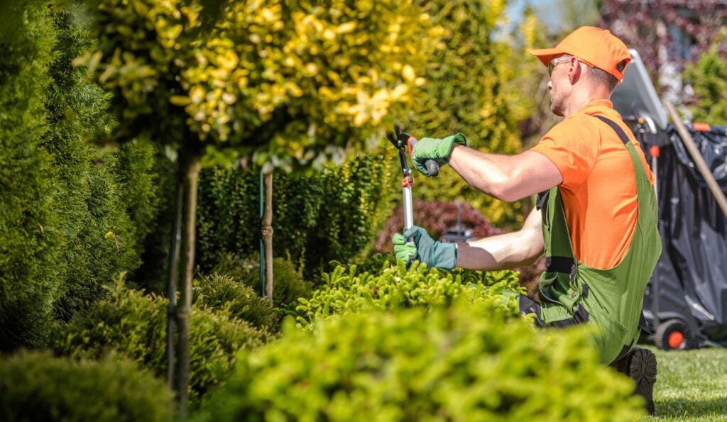 Professional Tree trimming and Prunning services at Mortensen Tree Service