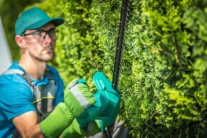 Professional Tree Trimming Services with Mortensen Tree Service
