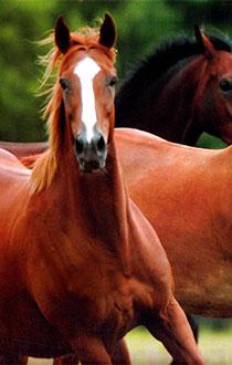 articles_horse14