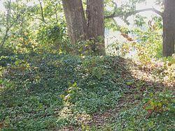 Earthenworks still visible at Ft. Ethan Allen near Washington DC