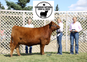 Red Ter-Ron Six Mile Misty 131H-ChampionPurebredFemale-AllBreeds