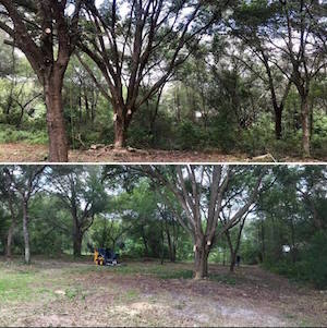 Land Clearing Service in Sorrento Florida