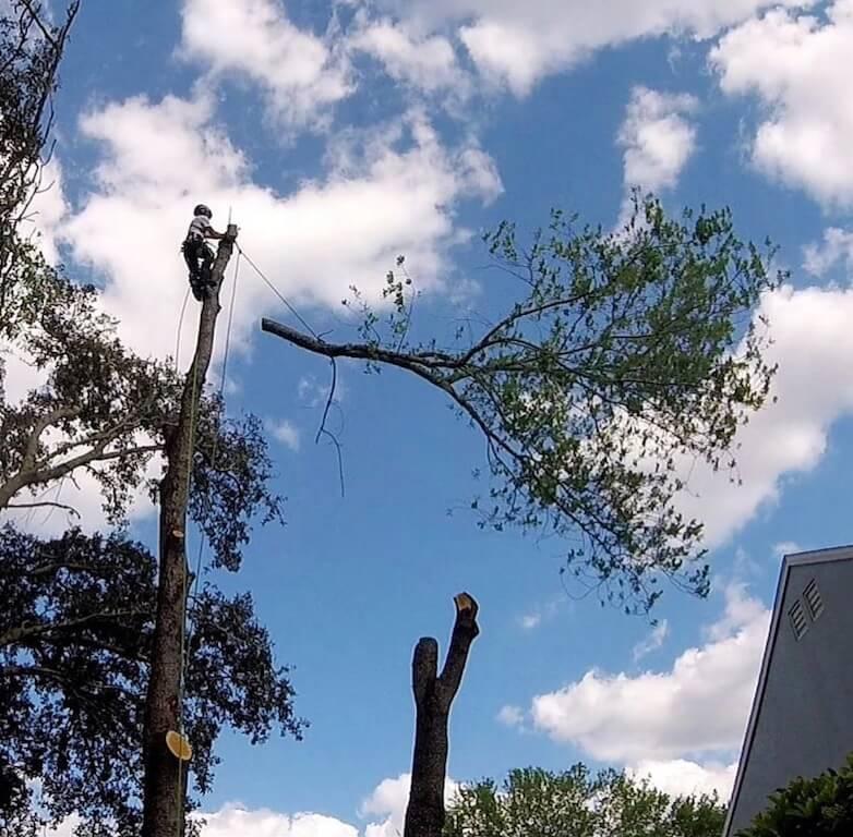 Tree Removal Service in Sorrento Florida