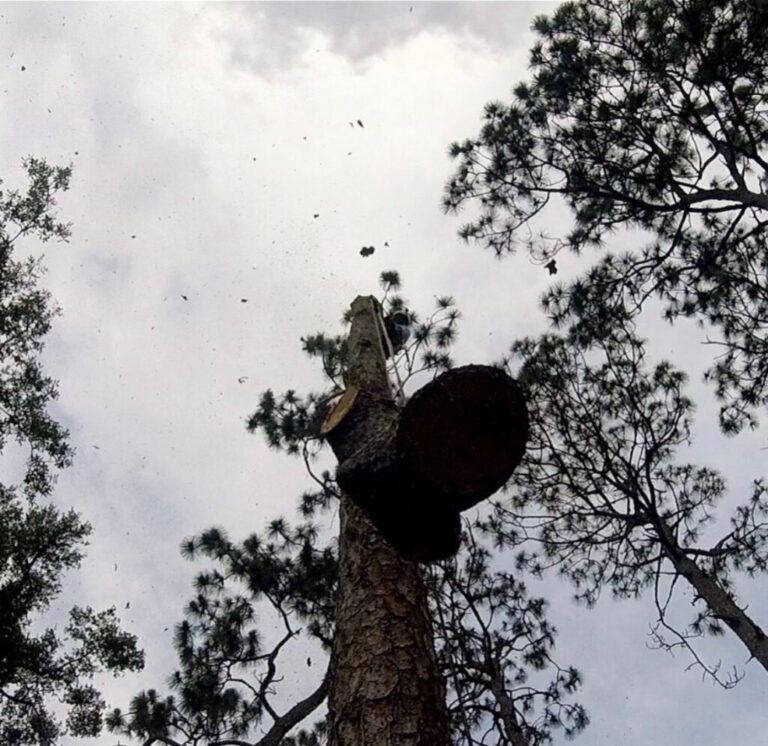 Tree Removal Service in Sorrento,FL