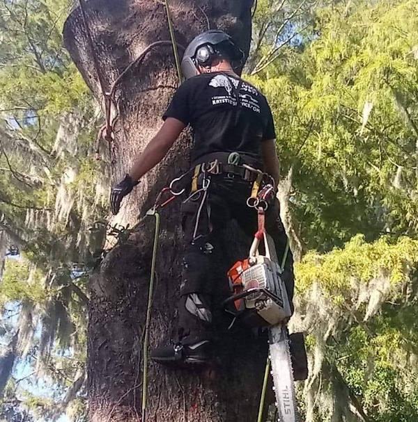 Tree Removal Service Serving Tavares Florida