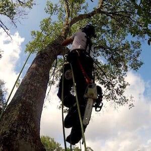Tree Trimming in Sorrento Florida
