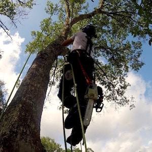 Tree Service in Sorrento Florida