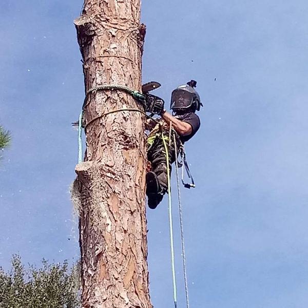 Tree Removal in Sorrento,FL by Kats Tree Service