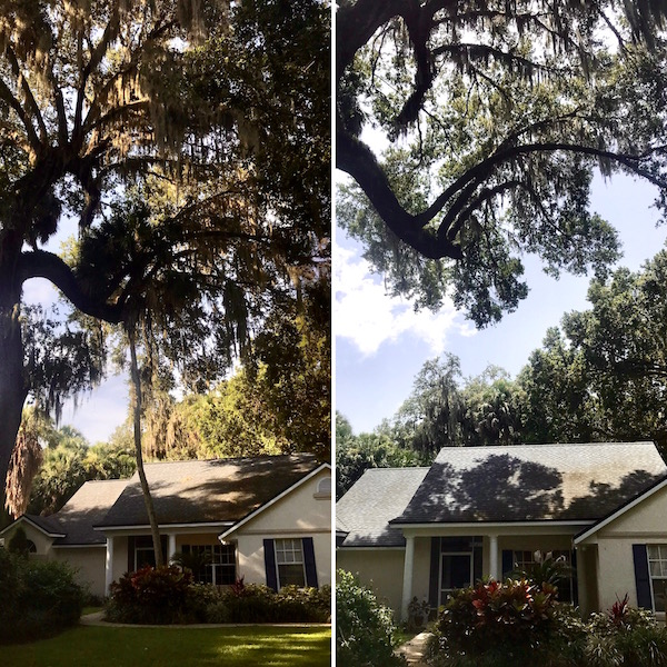 Tree Trimming in Tavares,FL by Kats Tree Service