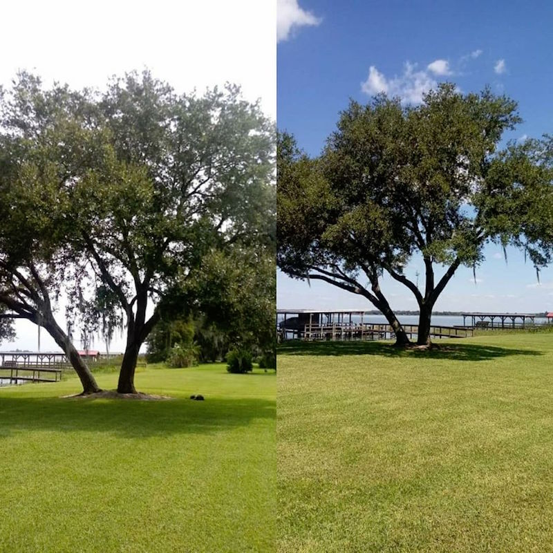Deer Island Tree Trimming Project by Kats Tree Service