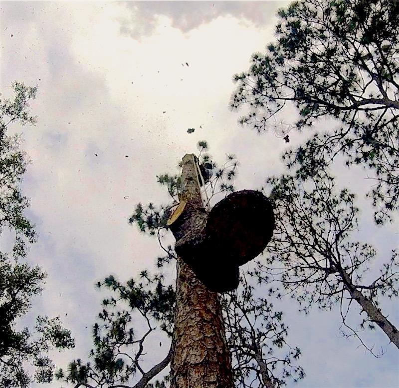 Apopka Tree Removal Services by Kats Tree Service