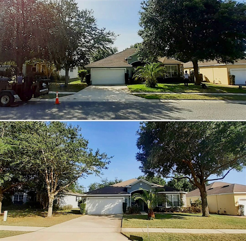 Sorrento Springs Tree Trimming by Kats Tree Service