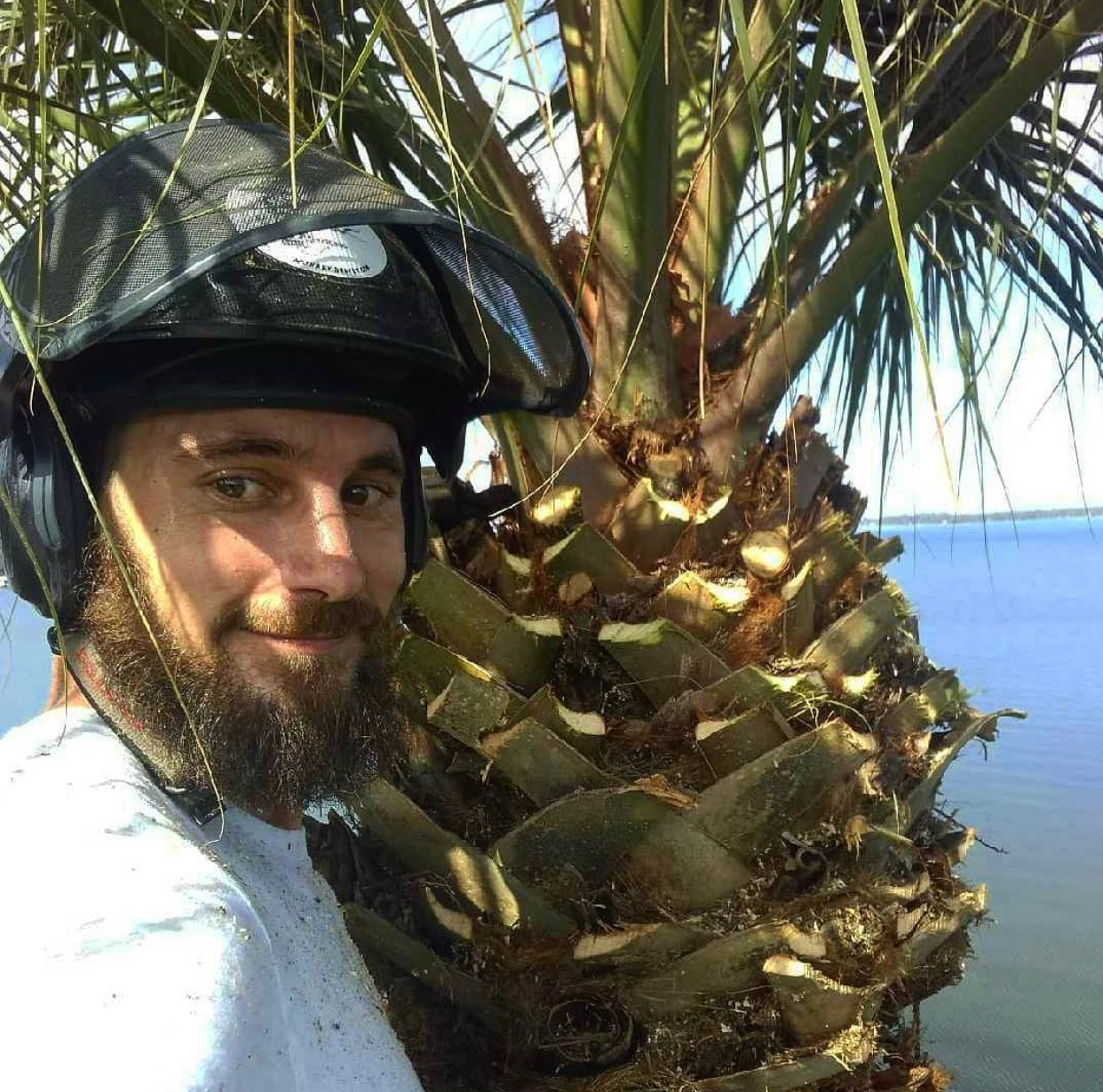 Palm Tree Trimming by Kats Tree Service