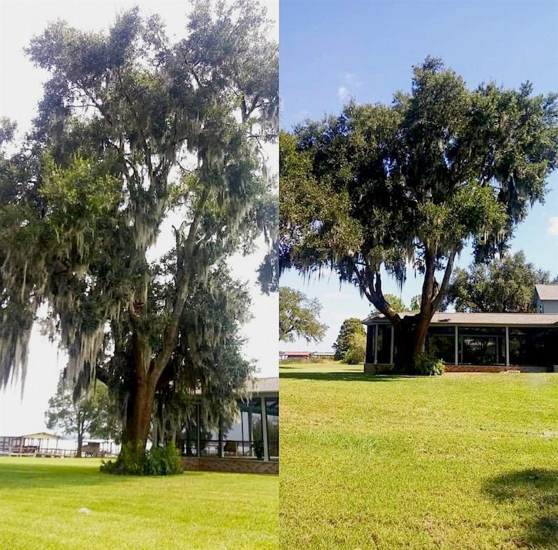 Tree Trimming Service in Tavares Florida
