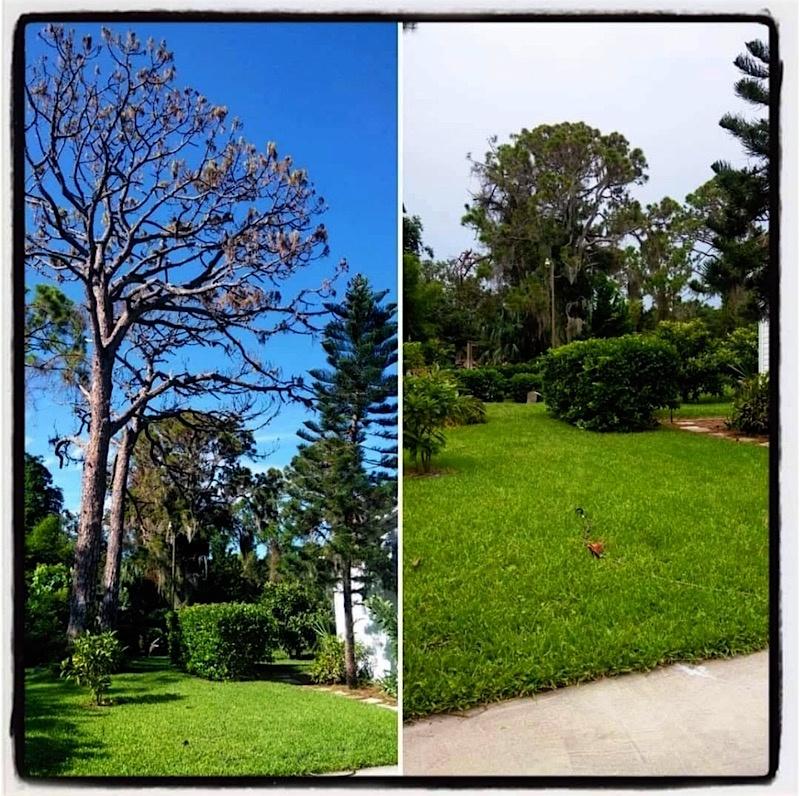 ine Tree Removal in Mount Dora, FL by Kats Tree Service