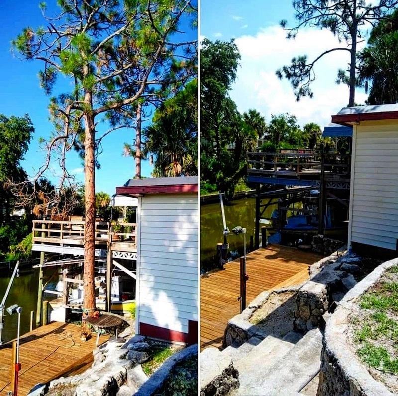 Tree Removal in Tavares by Kats Tree Service