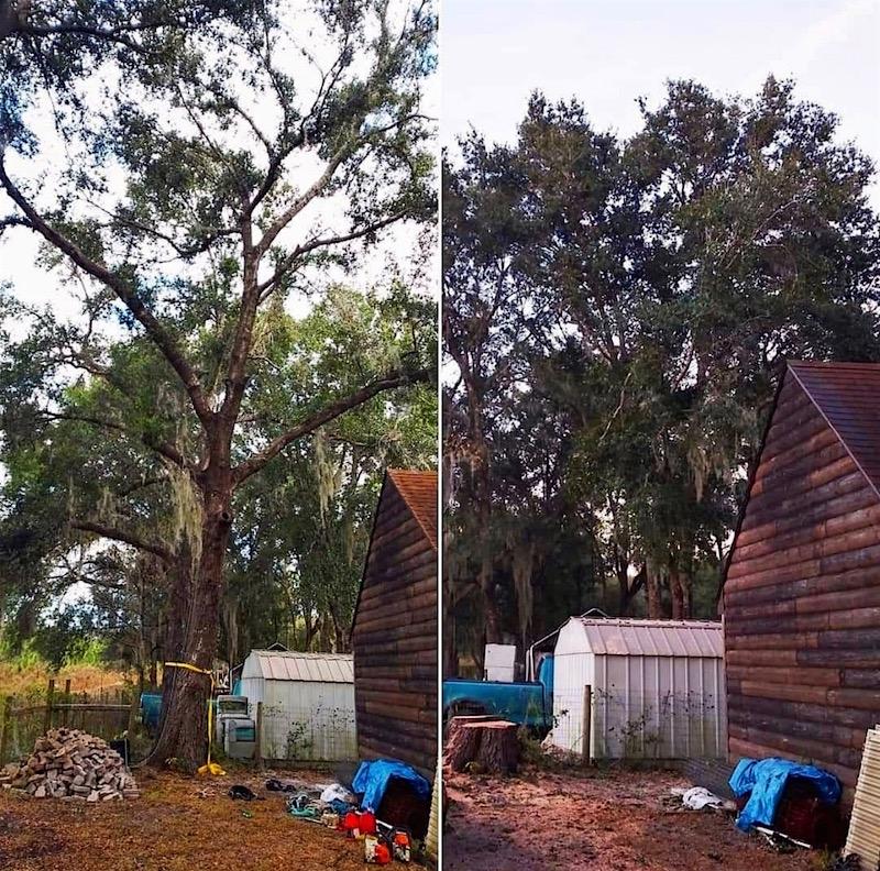 Tree Removal Paisley, FL by Kats Tree Service