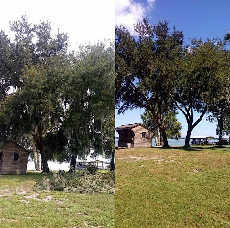 Tree Service in Tavares Florida