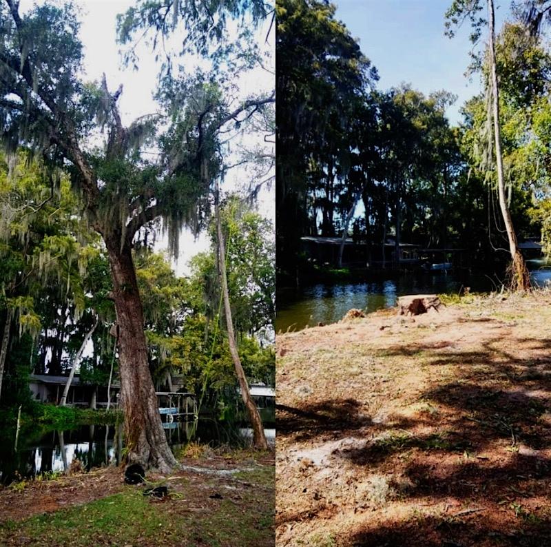 Tavares Tree Removal