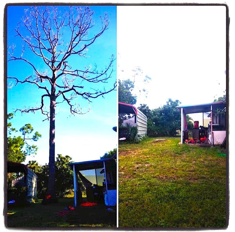 Tavares Tree Removal by Kats Tree Service