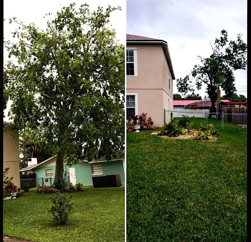 Sorrento, FL Tree Removal by Kats Tree Service