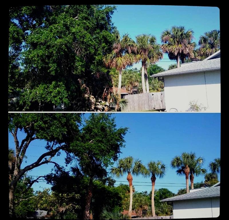 Tree Trimming Service in Eustis,FL