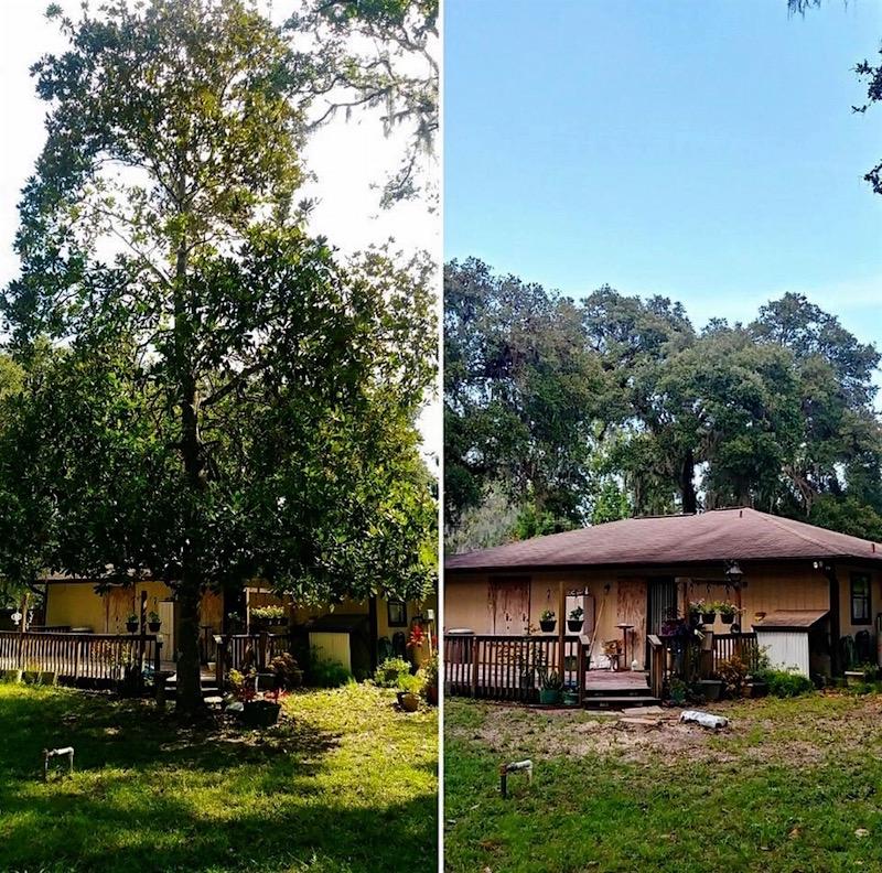 Tree Removal in Mount Dora, FL by Kats Tree Service