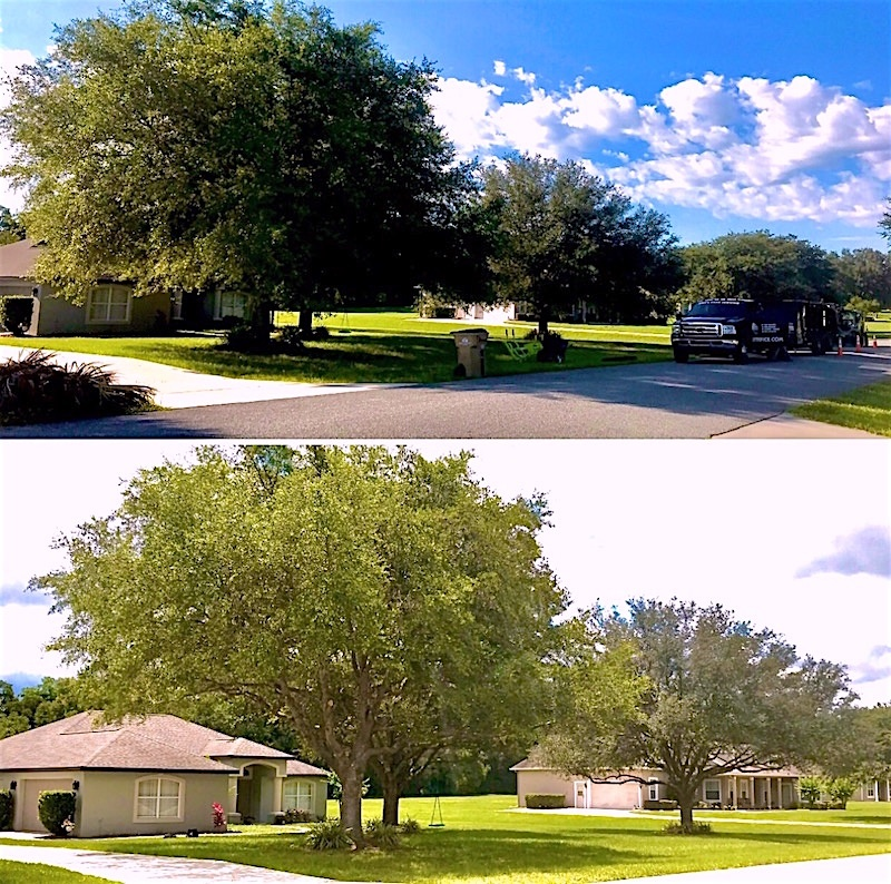 Tree Trimming Service in Sorrento Florida