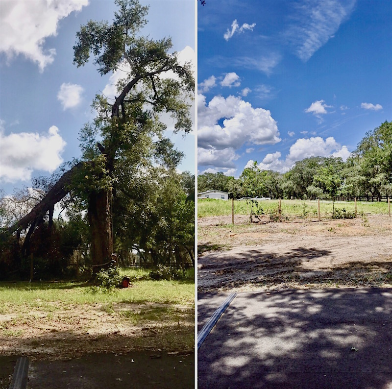 Storm Damaged Tree Removal in Eustis, FL by Kats Tree Service