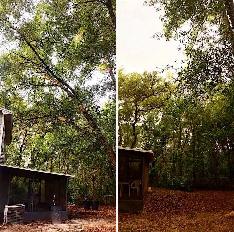 Hazardous Oak Tree Removal in Sorrento, FL