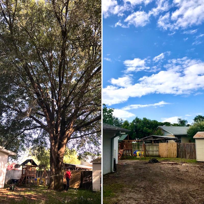 Large Oak Tree Removal in Eustis, FL by Kats Tree Service