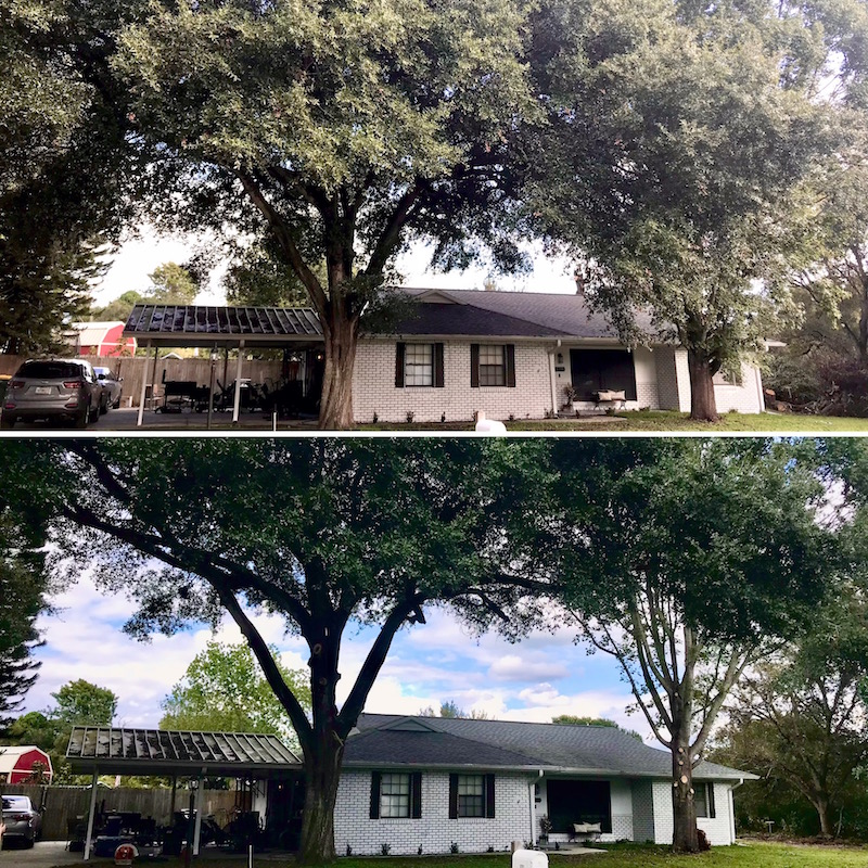 Tree Trimming in Eustis by Kats Tree Service